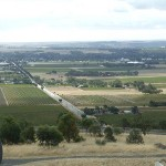 Barossa Valley Wines