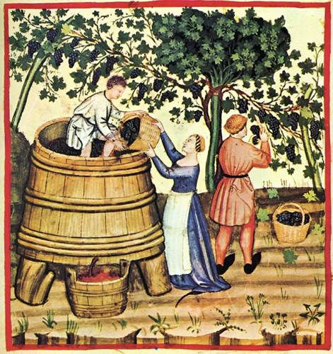 Harvesting and Pressing Grapes, Miniature by Giovannino de Grassi