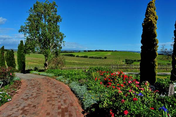 View from Coriole Vineyards, South Australia